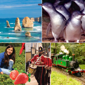Great Sights 123 Save tour: great ocean road, Penguin Parade, Puffing Billy, Sovereign Hill, Mornington Peninsula