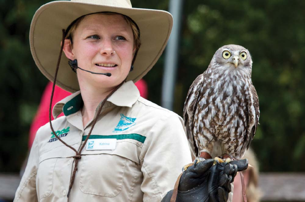 Melbourne Wildlife Tour, Spirits of the Sky show, Healesville Sanctuary